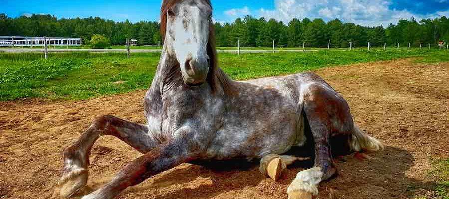 beau cheval apaisé en pleine nature